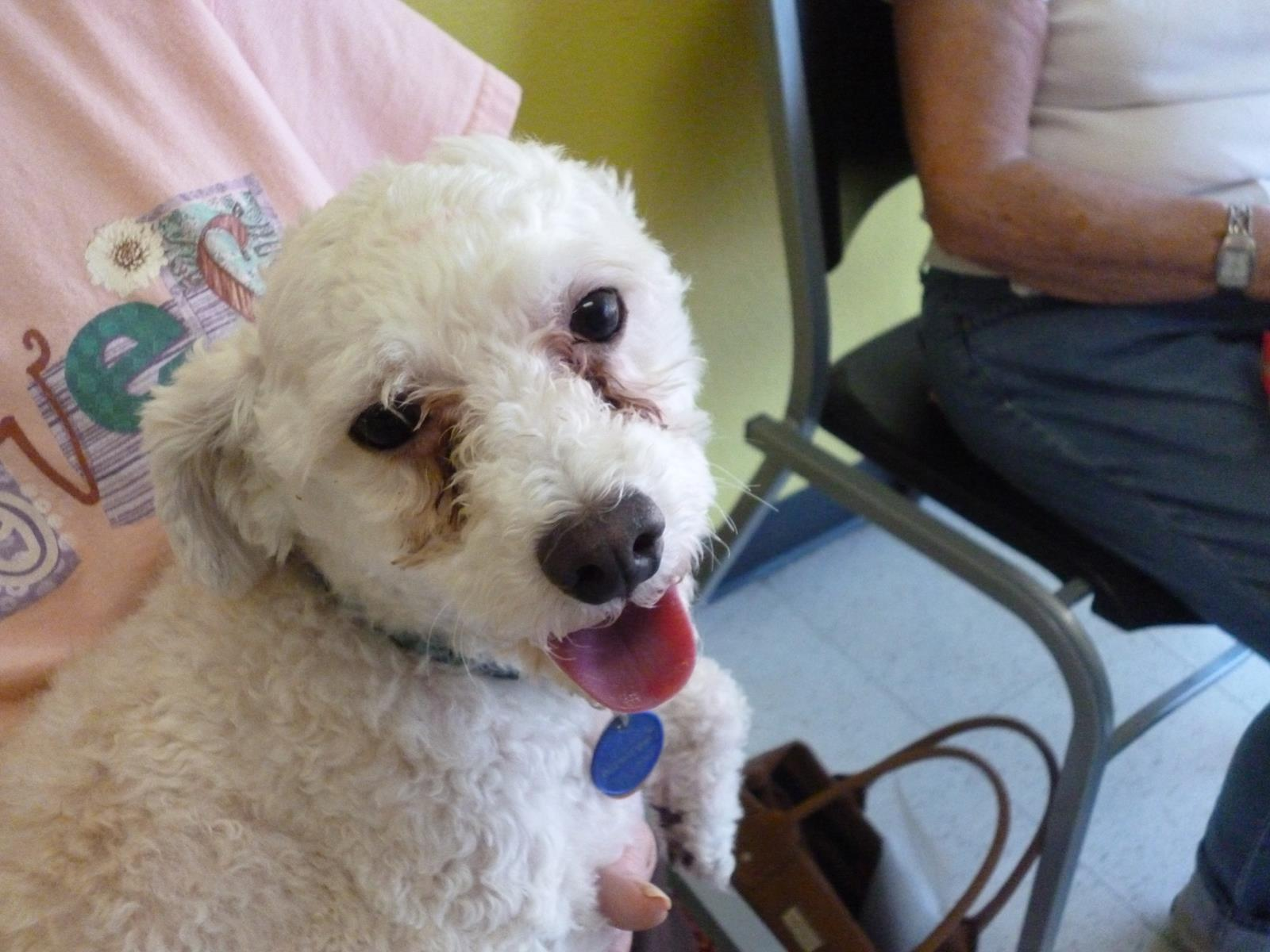Dog And Human Mix Paco � poodle mix � adopted
