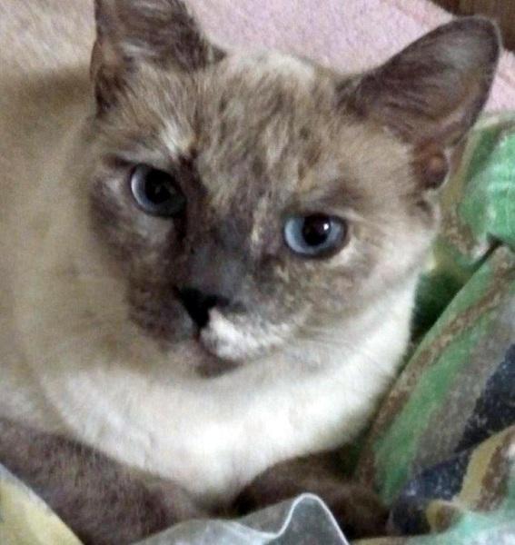 Cat Rescue Mission Statement