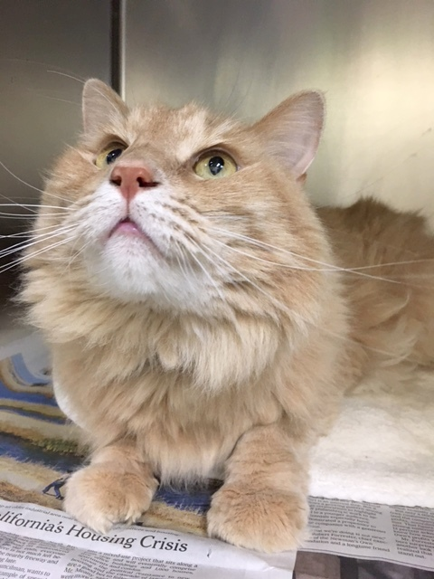 Declawed Cats For Adoption In Maine